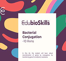 Bacterial Conjugation Teaching kit