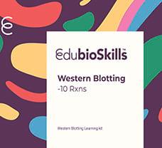 Western Blotting Teaching kit